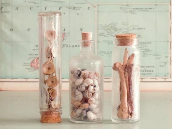 Vintage Bottle Trio:  Fish vertebrae, snail shells, scavenged animal bones. Cabinet of curiosities.