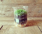 Mother's Day Gift // Moss Terrarium - Home Decor - Office Decor - Science & Garden (250ml) - Vertegris