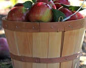 Apple Harvest - 8x10- Original Signed Photo - KristinReyer
