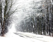 Winter Photography, Winter Decor, Christmas Decor,  White, Snow, Woodland, Black and White - 8x10 Print - 8daysOfTreasures