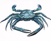 Vintage Blue Crab Print - French Natural History - Seaside style - Beach Home decor - swanboroughprints