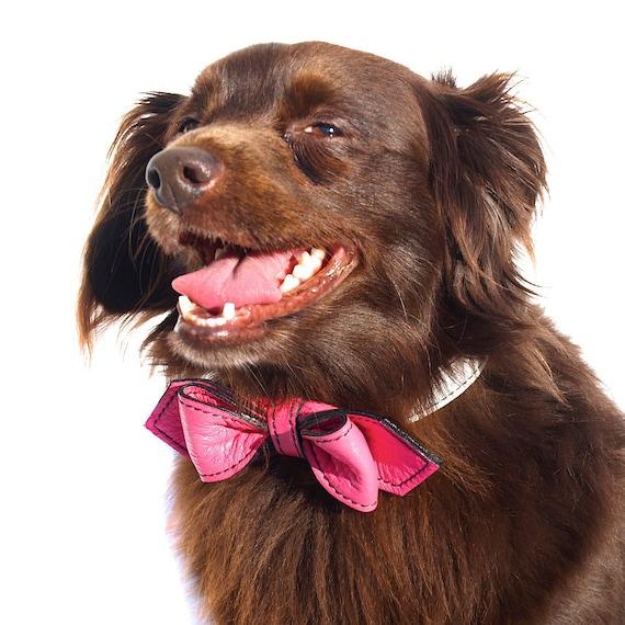 Peppermint Swirl Martini Bowtie Dog Collar