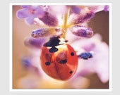 Insect Art Ladybug Photo, 10x10 print, Orange and Purple, square print, nursery art - IslayCorners