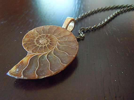 Amber Shell Necklace