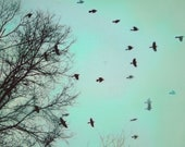 Moving on, 11x14, Fine art photograph, bird art, teal art, bare trees, Blackbirds, nature photograph - dahliahousestudios