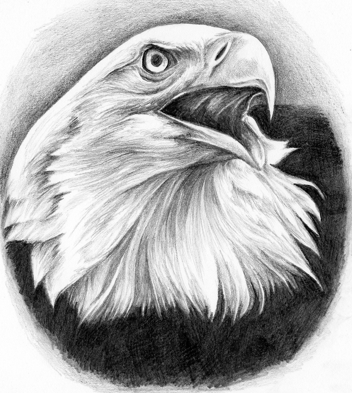 Eagle head pen   Eagle Head Pencil Drawing Easy