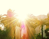 Morning Sunshine, Palm Trees, California Photography, Nature, Yellow, Green, Bright, West Coast - California Morning (8x10) Fine Art Print - urbandreamphotos
