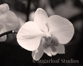 Black and White Orchid 2 -- Fine Art Floral Photography Print -- 8x10, Photo, Home Decor, Flowers, Art - SugarloafStudios