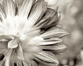 ACEO Flower Sepia Dreamy Glow Floral Photography - LTphotographs
