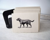 Labrador Retriever Cards - 5x7 Note Cards - Set of 6 - Black Lab Stationary - TerraDeiFarm