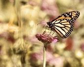 Landscape photography, Butterfly Print, flower photograph, Butterfly Photo, gold wall art, mauve decor, mauve, gold decor - SeeLifeShine