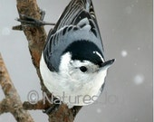 Nuthatch Snowflakes Note Card - NaturesJoyNoteCards