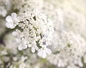 "Queen Anne's Lace Macro Flower Print 9"" X 12"" Fine Art Photography, White Wildflower Print - BeneathNorthernSkies"
