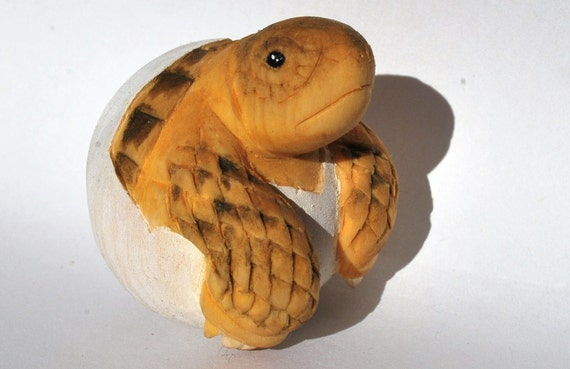 Small bolson tortoise (Gopherus flavomarginatus) hatchling / pipping woodcarving / sculpture