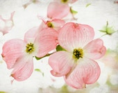 Nature photography  - Pink Dogwood flowers - spring flower petals bright pink white nursery decor - floral botanical print 8x10 - Happy Pink - LupenGrainne