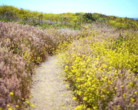 spring flowers bloom in landscape with walking path