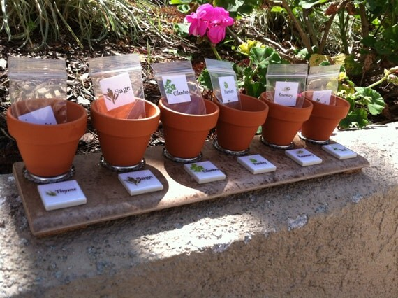 Mini Windowsill Herb Garden Deluxe with FREE seeds included
