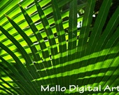 Crossed Green Palm Fronds Light and Shadow (2) - Tropical Tree Abstract - Monochrome Macro Photo Print (11x14)