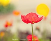"Poppy  Photography - Flower Petal Photograph - Red Pink Yellow Orange - Home Decor - Fine Art 8x8 - ""IMAGINE"" - DreamyPhoto"