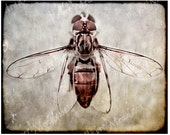 Steampunk Photo Download, Bee, Wasp Fly, Photography, Digital Collage, 8x10, Browns, Earth tones, Rustic, Textured Photo - PaperMeadows