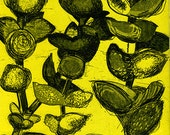 Yellow Succulent  Etching & Aquatint Hand Pulled Original Print - OOAK