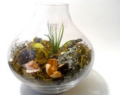 Spring is here, moss and air-plant terrarium, home decor, zen - EclecticZen