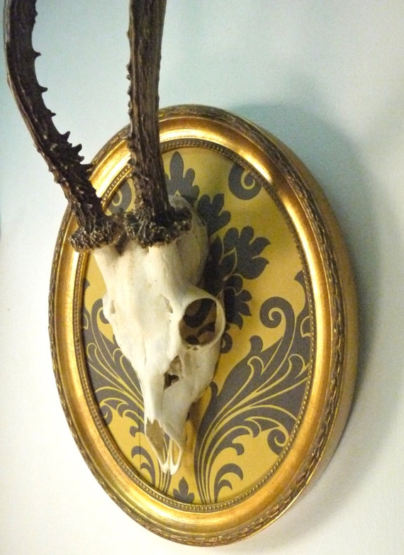 German Roe Deer Skull Antlers Mounted In Vintage Oval Frame