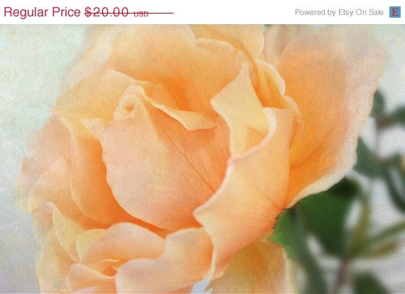50% OFF CIJ SALE My Favorite Rose Digital Photograph