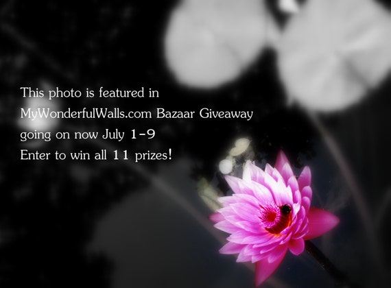 Enter to Win - Glowing Lotus - black and white and pink - bumble bee - meditation spa - original zen / floral photography - wall art - 8x10