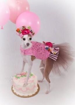 День рождения Sprinkles Туту Harness собак платье