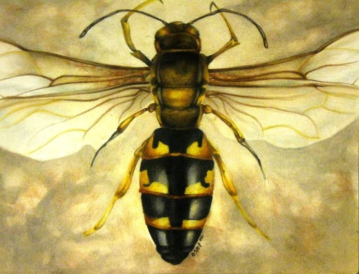 Original Wasp Illustration Prints 9x12""