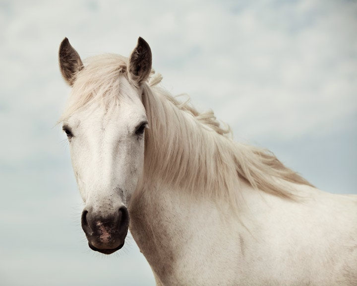 ������� ��������, ������� Wall Art - Equus - �������� ����������, Room Decor �������, ������ White Horse, ������� ����������