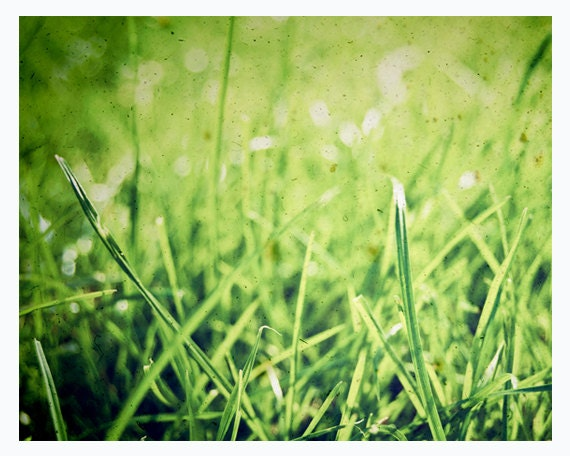Green grass photograpy - summer wall decor, meadow, nature - 8x10 print - The grass isn't always greener on the other side