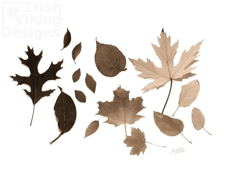 Feuilles Leaves 8x10 original photography print, leaves, rustic, woodland, cabin art, gradient - IrishVikingDesigns