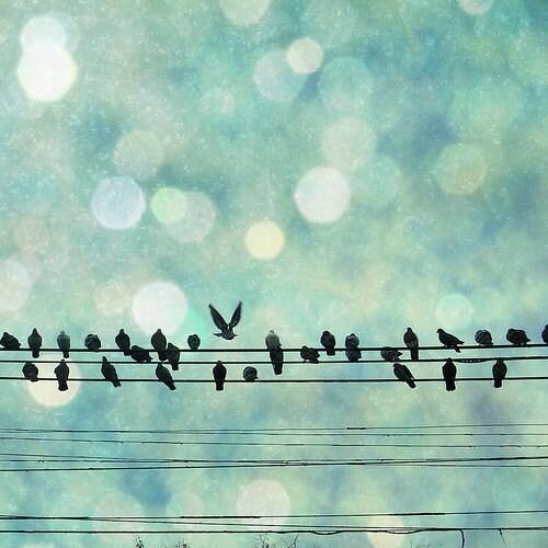 Blue, Bokeh, Birds, Nursery, Wall Deocr, White, Cold, Winter, Magical, Black - Snow Birds