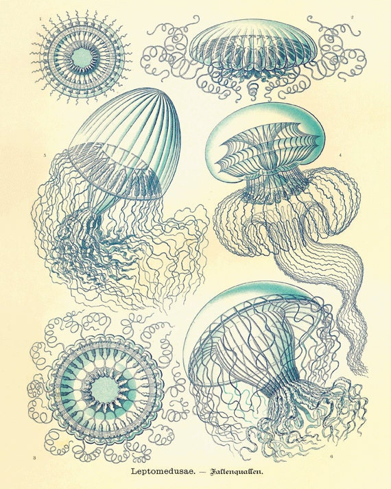 Jellyfish Vintage prints old prints Nautical art print Ocean Decor Natural History sea life art antique prints nature print 8x10 art print - AntiqueWallArt