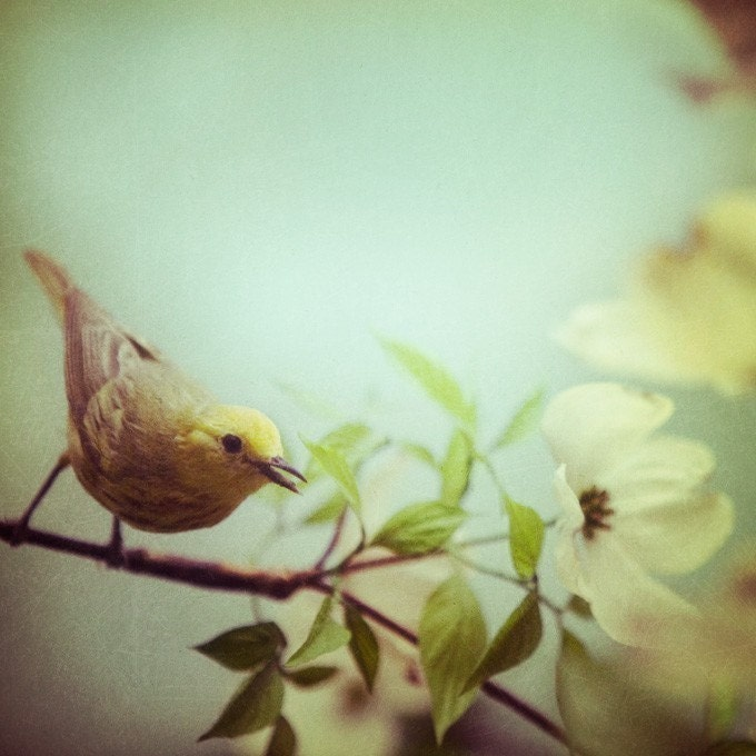 Spring, Bird photograph - Twitter - Fine art nature photography - easter, natural history museum, pastel - EyePoetryPhotography