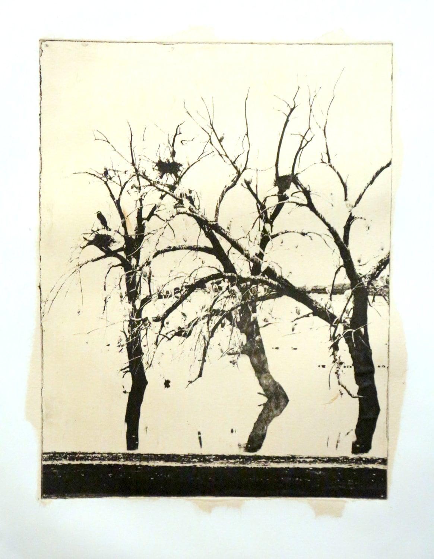 Redhill Egrets-etching - wmprintmaking