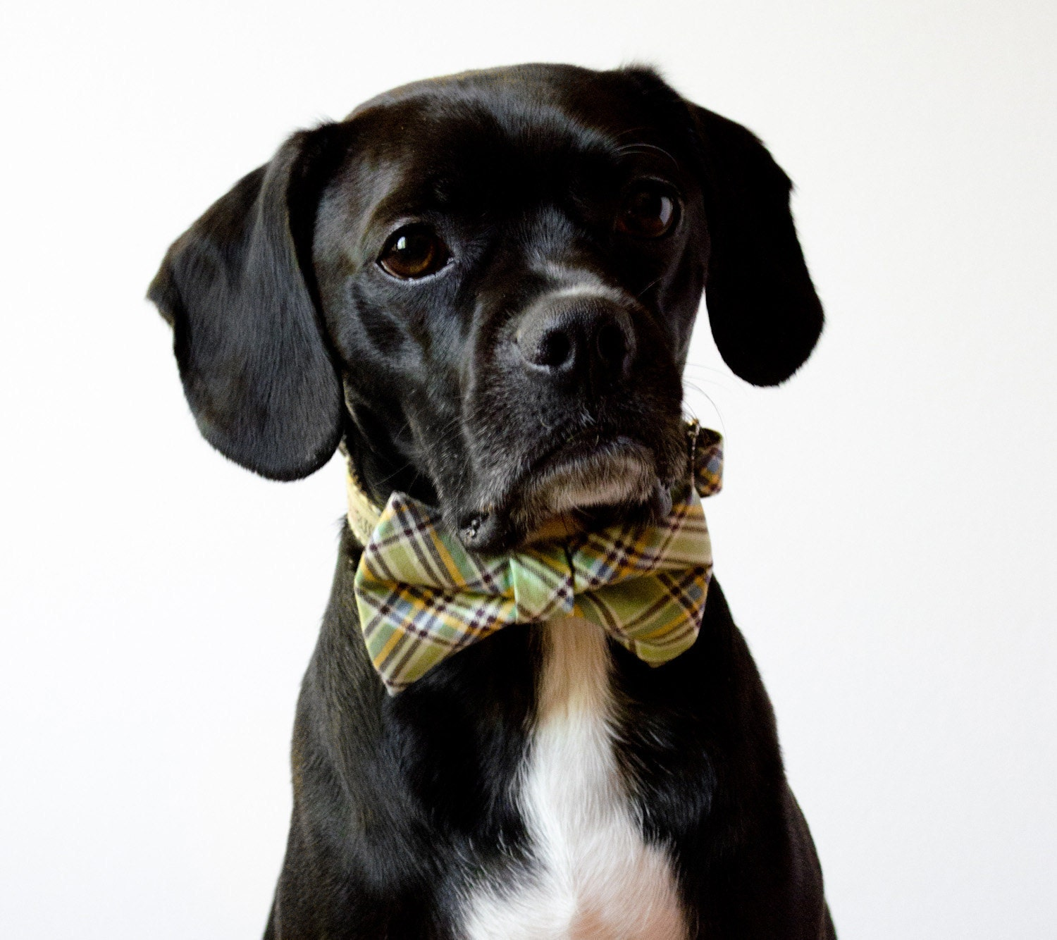 Pistachio Green Plaid Dog Bow Tie Collar