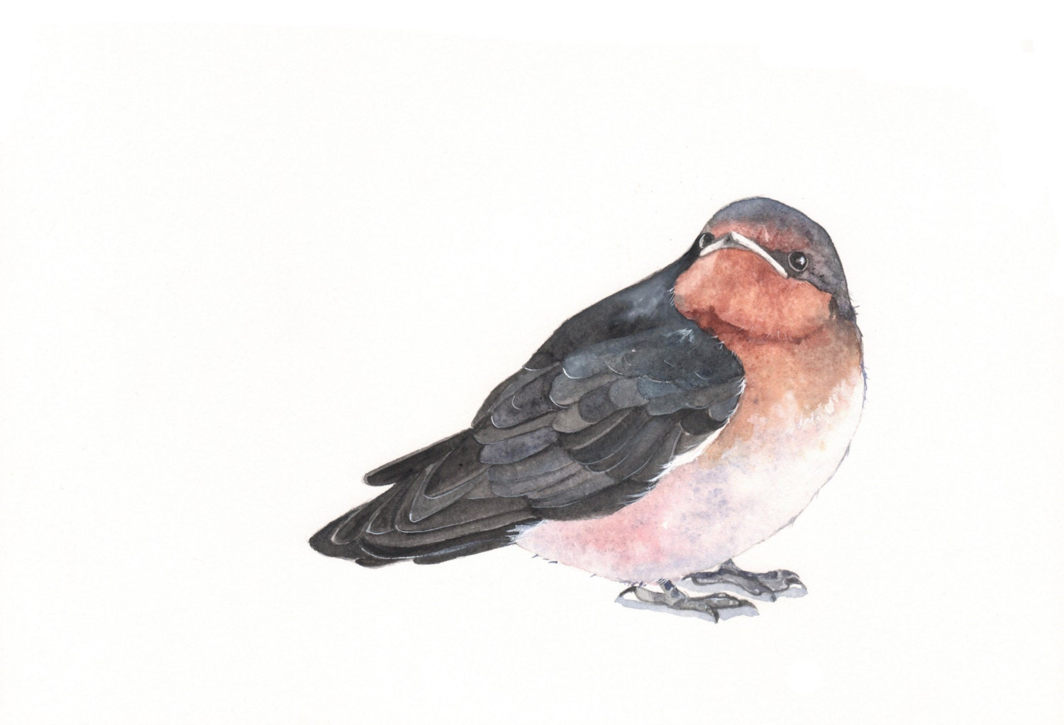 Swallow watercolor painting- print of watercolor painting- A4  print - Splodgepodge