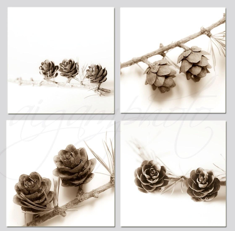 Brown white pine cones nature, botanical 4 photos, wall art  print 8x8 inch - fine Art photography - MemoriesPhoto