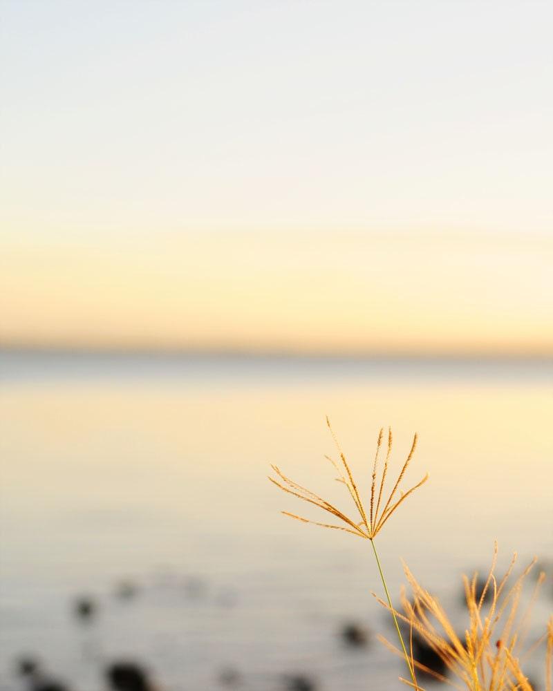 Beach Photography, Grass Photography, Sunset, Pastels, Beach Grass, Coastal Wall Art, Beach Home Decor 8x10 Fine Art Photography - Colourscape