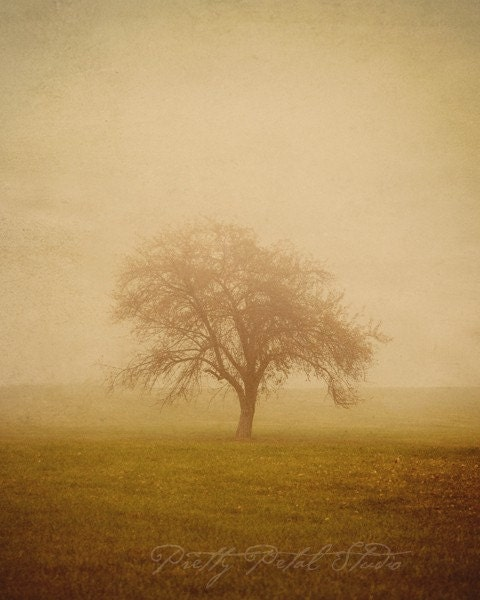 Fine Art Photograph, Lone Autumn Tree in the Fog, Morning Drive, Landscape Photography, Golden Tones, November, 8x10 Print - PrettyPetalStudio