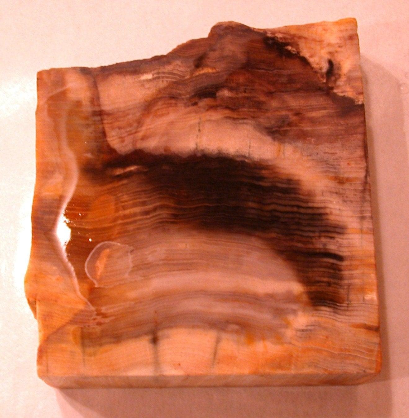 Petrified Wood Slab Slice Chunk Piece 1, Six Pounds - driftingby