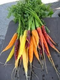 Organic Heirloom Rainbow Carrot Seeds EXCLUSIVE CUSTOM MIX best sellers - kenyonorganics