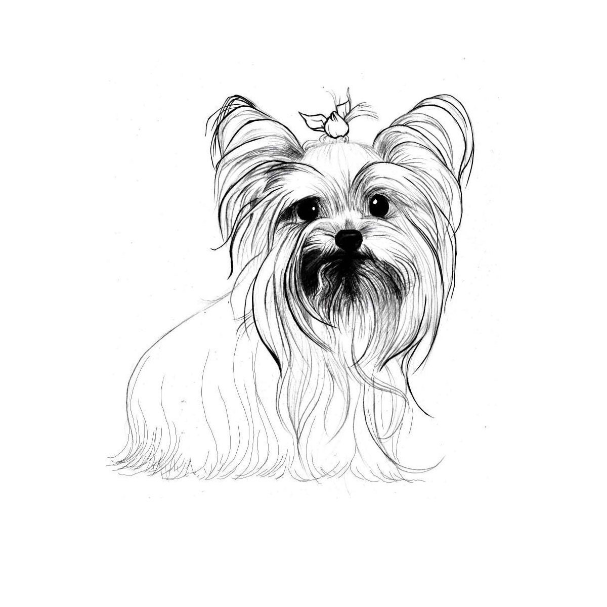 yorkie coloring pages yorkshire para colorear imagui