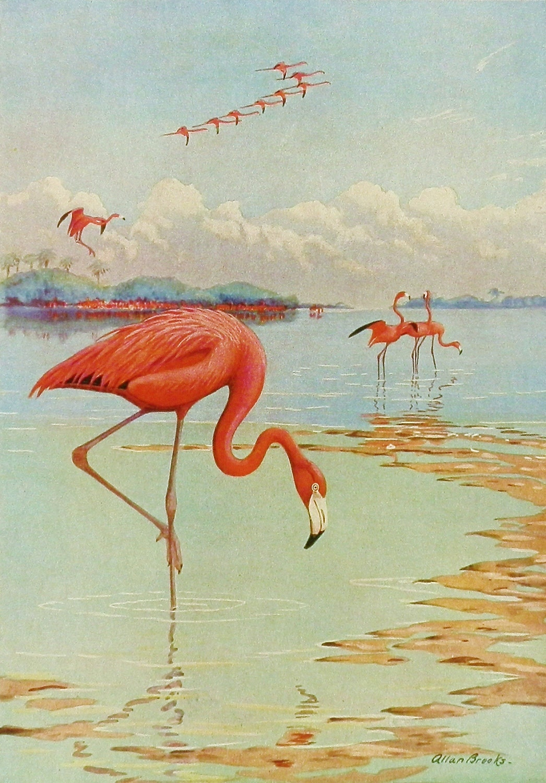 Flamingo Bird Print Bird Art 1930s Beach By