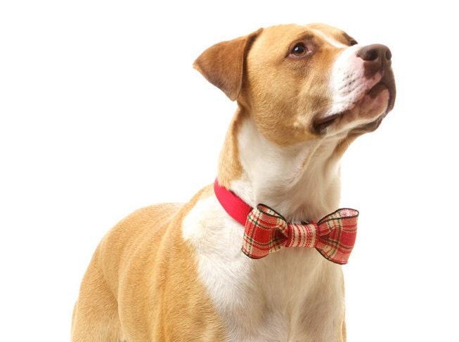 Dog Bow Tie: Spring Formal Bow / Collar Corsage for Dogs in MED / LRG - Wired Bow in Red & Cream