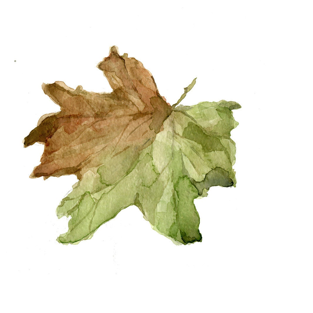 Fall Leaf , original watercolor painting of dried leaves in brown and green,nature,  natural history ,automn