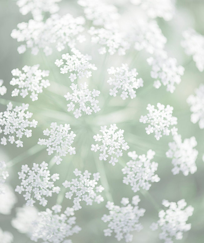 Nature Photography -  Queen Anne's Lace, White Floral Photograph, Neutral Wall Decor - GeorgiannaLane